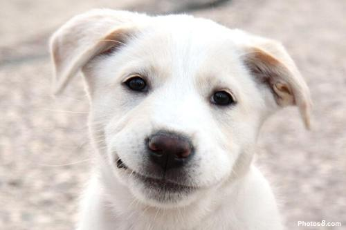 Smiling_Dog_Face