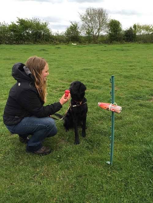 Emily Howard-Williams & Tui the sniffer dog (web)