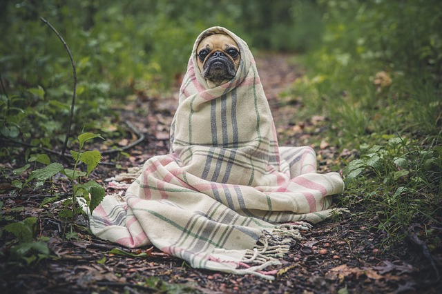 dog outdoors photo